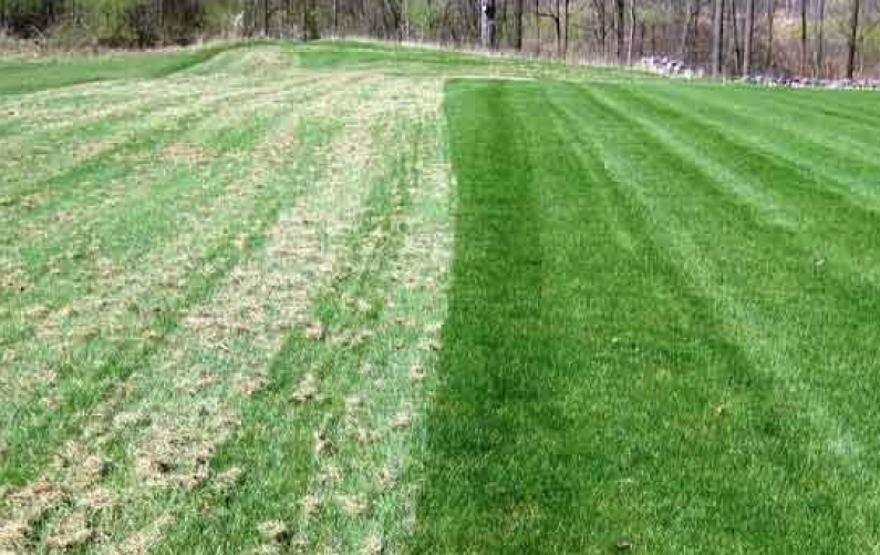 Lawn dethatching and maintenance